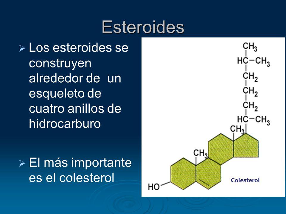 Esteroides Los esteroides se construyen alrededor de un esqueleto de cuatro anillos de hidrocarburo.
