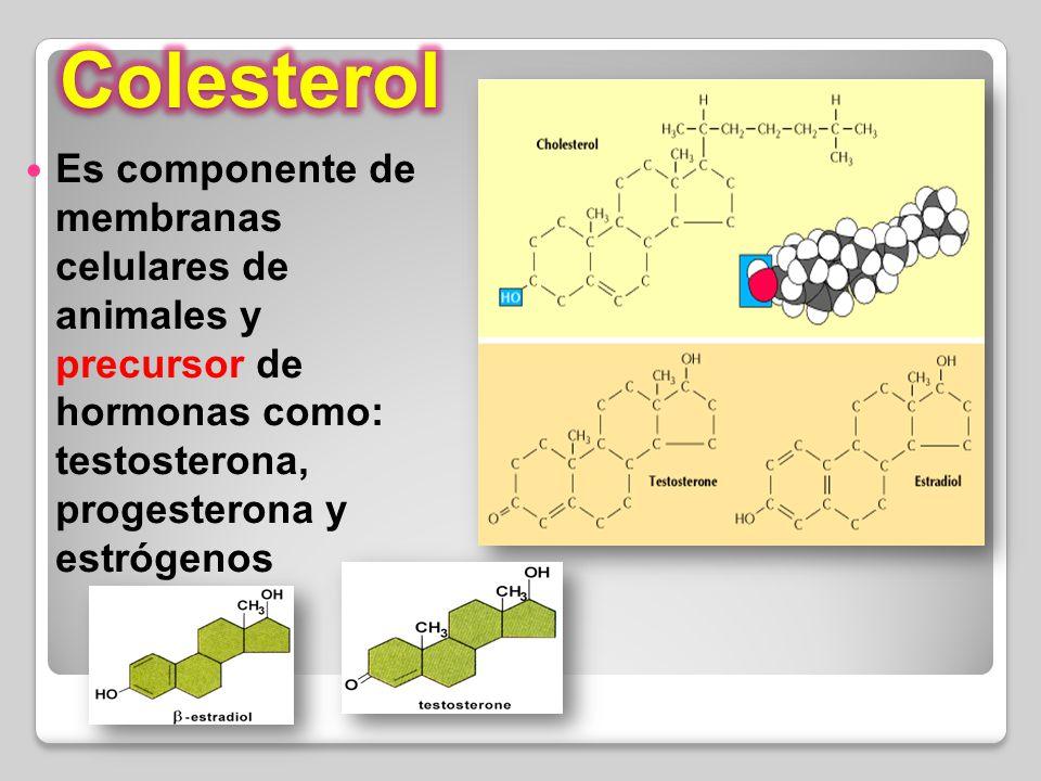 Colesterol Es componente de membranas celulares de animales y precursor de hormonas como: testosterona, progesterona y estrógenos.