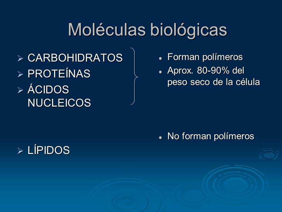 Moléculas biológicas CARBOHIDRATOS PROTEÍNAS ÁCIDOS NUCLEICOS LÍPIDOS