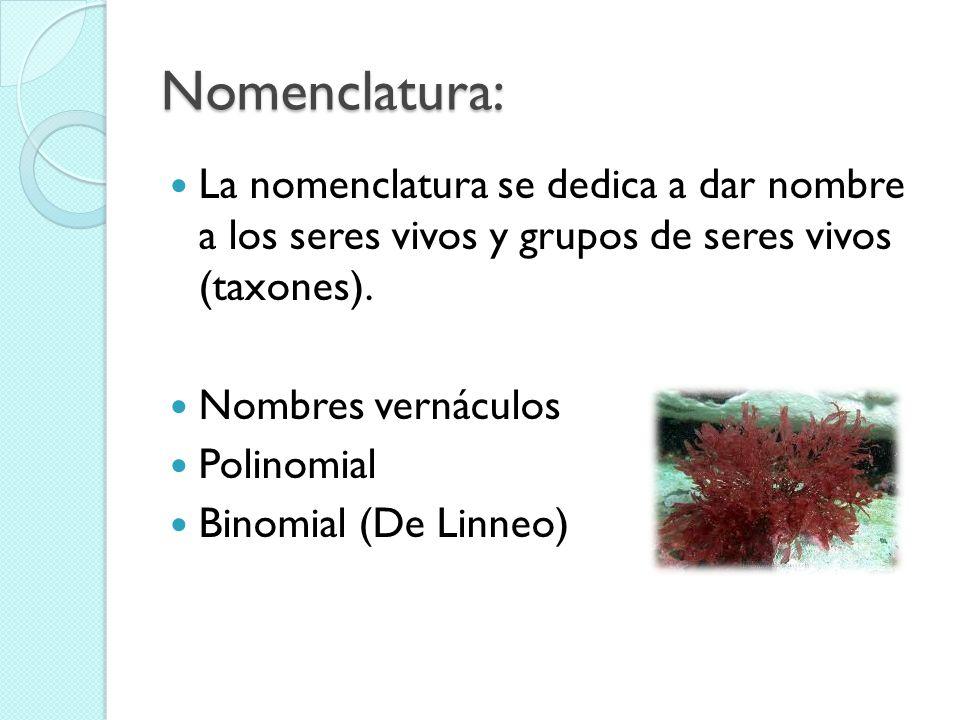 Nomenclatura: La nomenclatura se dedica a dar nombre a los seres vivos y grupos de seres vivos (taxones).