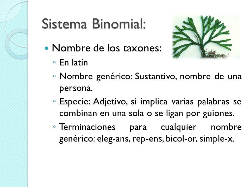 Sistema Binomial: Nombre de los taxones: En latín