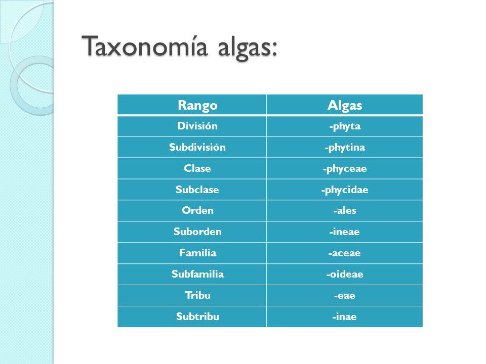 Taxonomía algas: Rango Algas División Subdivisión Clase Subclase Orden