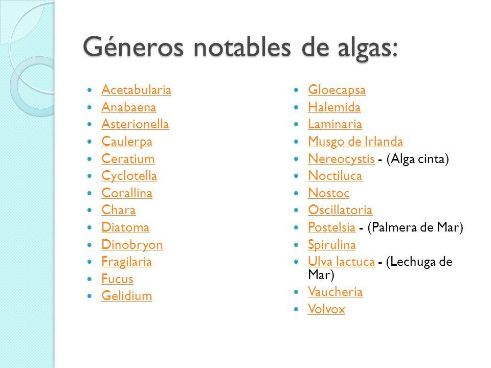 Géneros notables de algas: