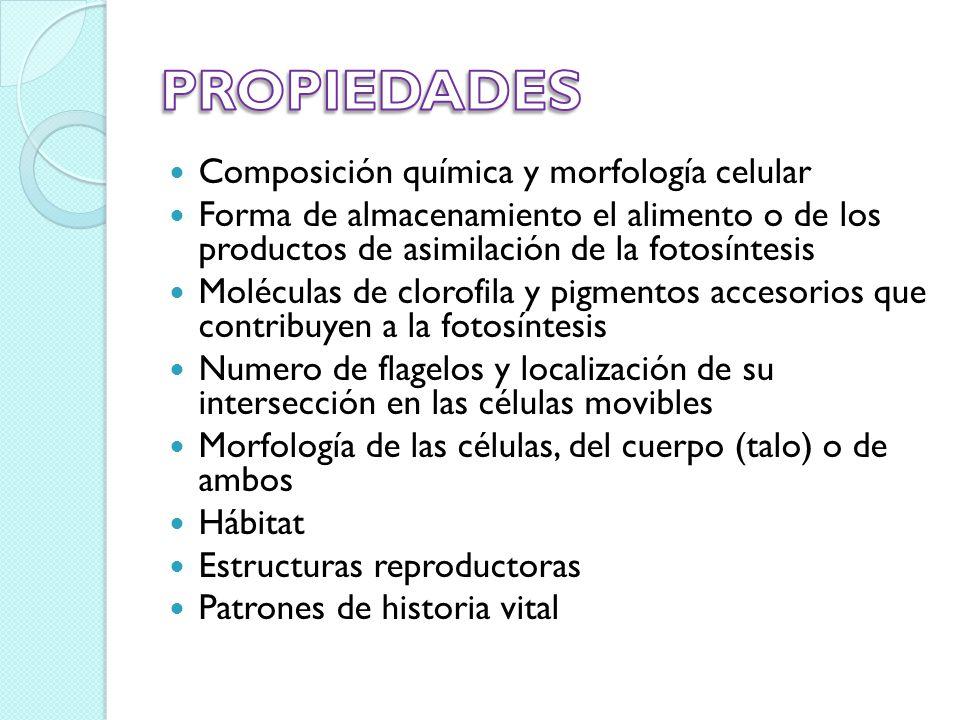 PROPIEDADES Composición química y morfología celular