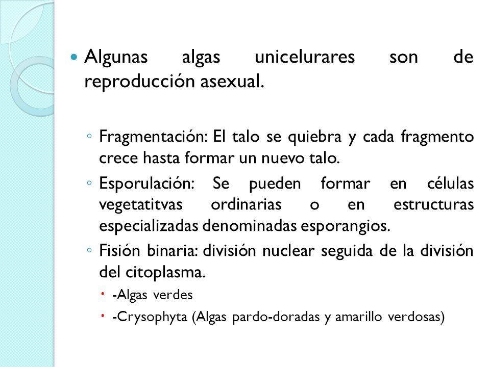 Algunas algas unicelurares son de reproducción asexual.