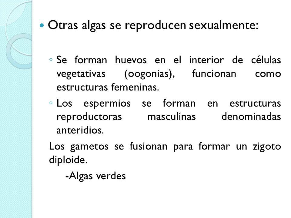 Otras algas se reproducen sexualmente: