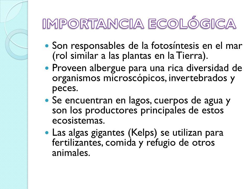 IMPORTANCIA ECOLÓGICA