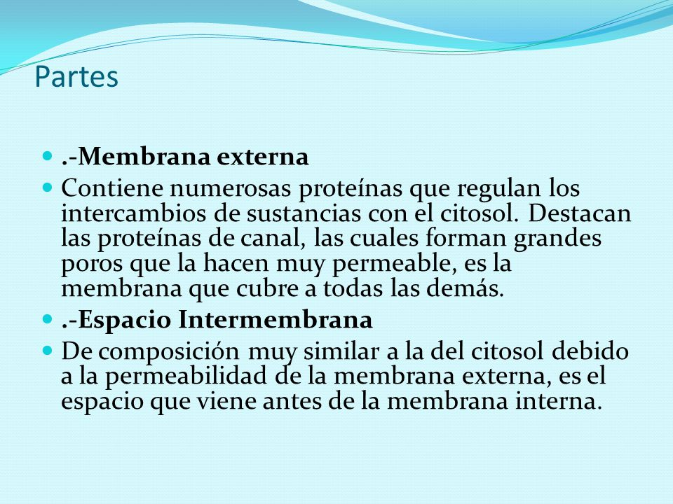 Partes .-Membrana externa