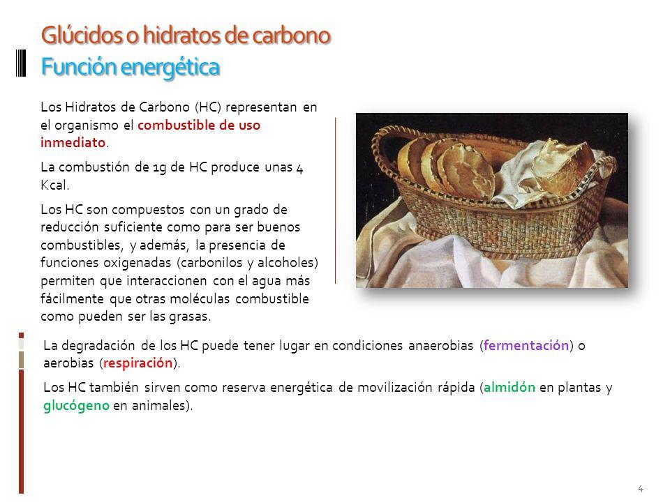 Glúcidos o hidratos de carbono Función energética