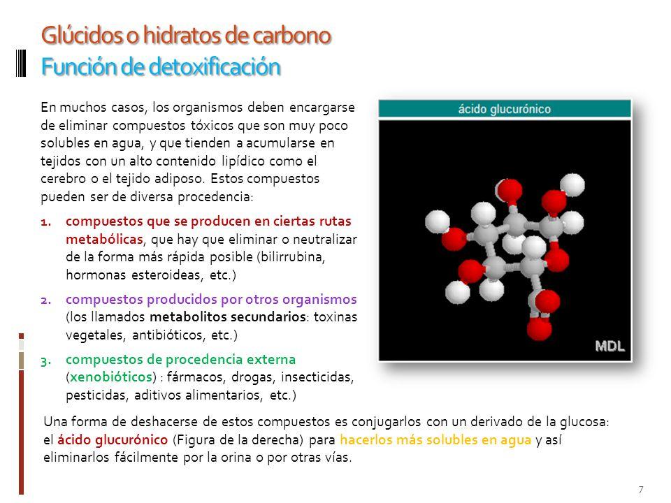 Glúcidos o hidratos de carbono Función de detoxificación