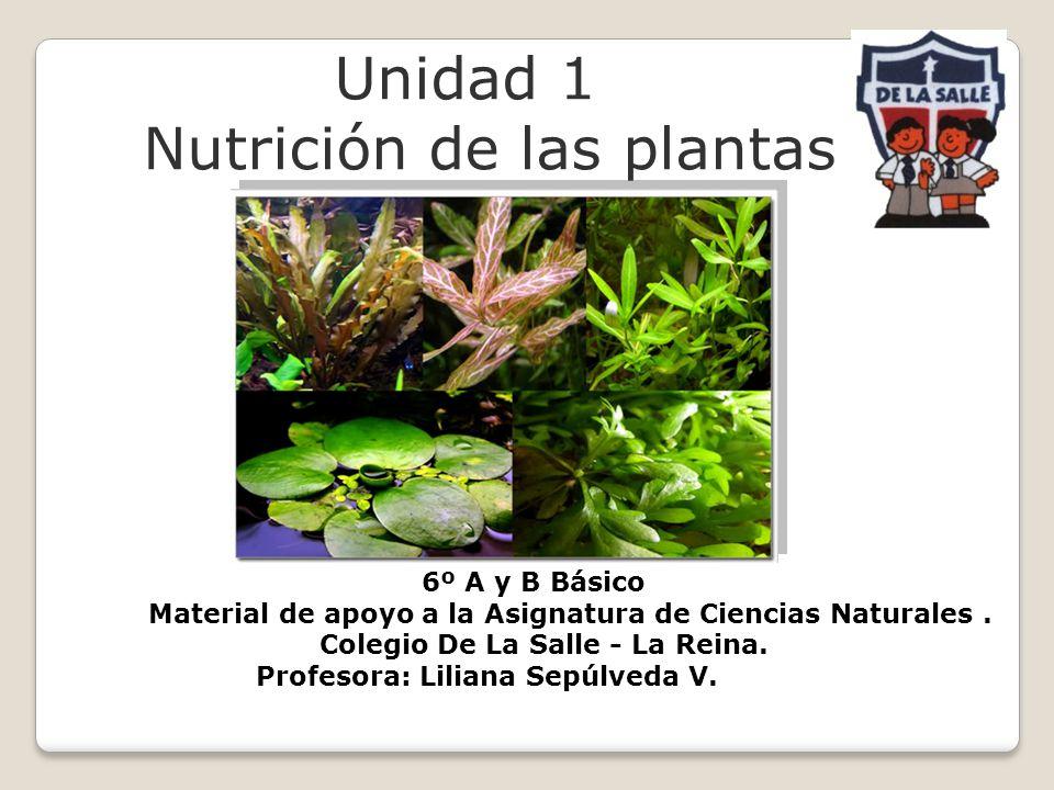 Unidad 1 Nutrición de las plantas