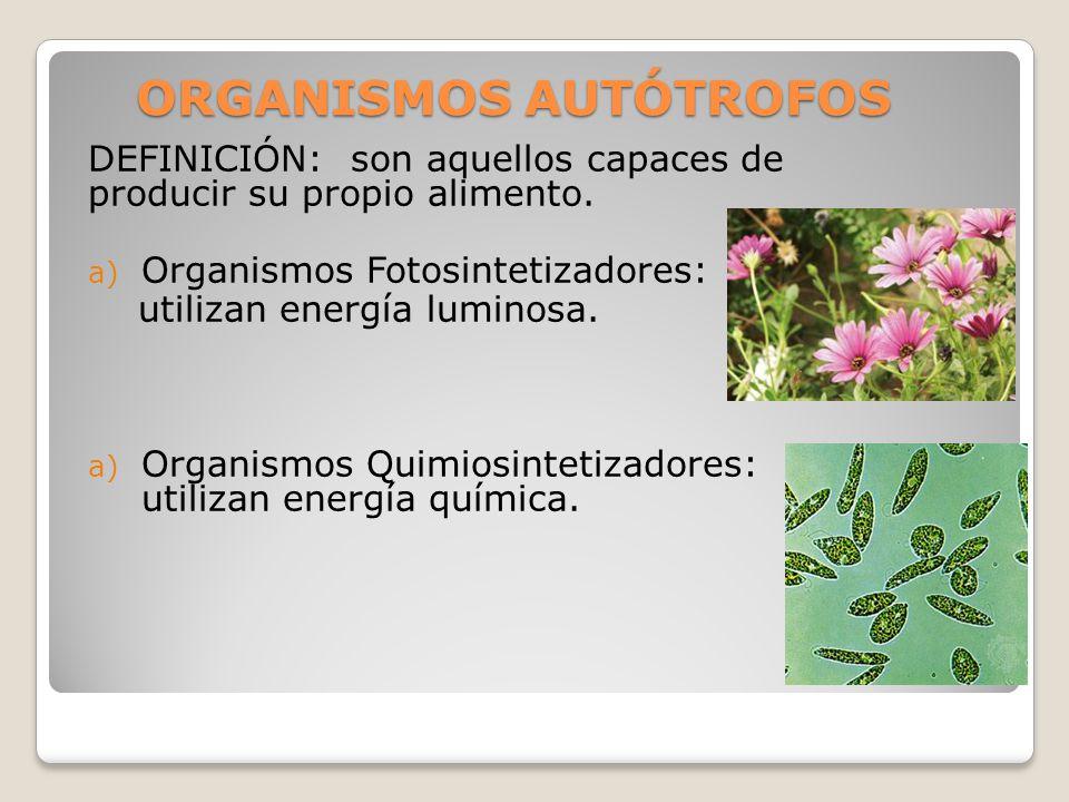 ORGANISMOS AUTÓTROFOS