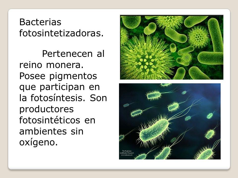 Bacterias fotosintetizadoras.