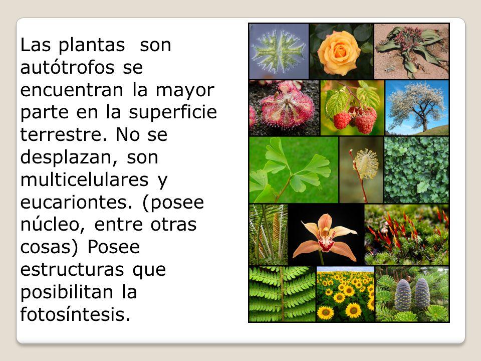 Las plantas son autótrofos se encuentran la mayor parte en la superficie terrestre.