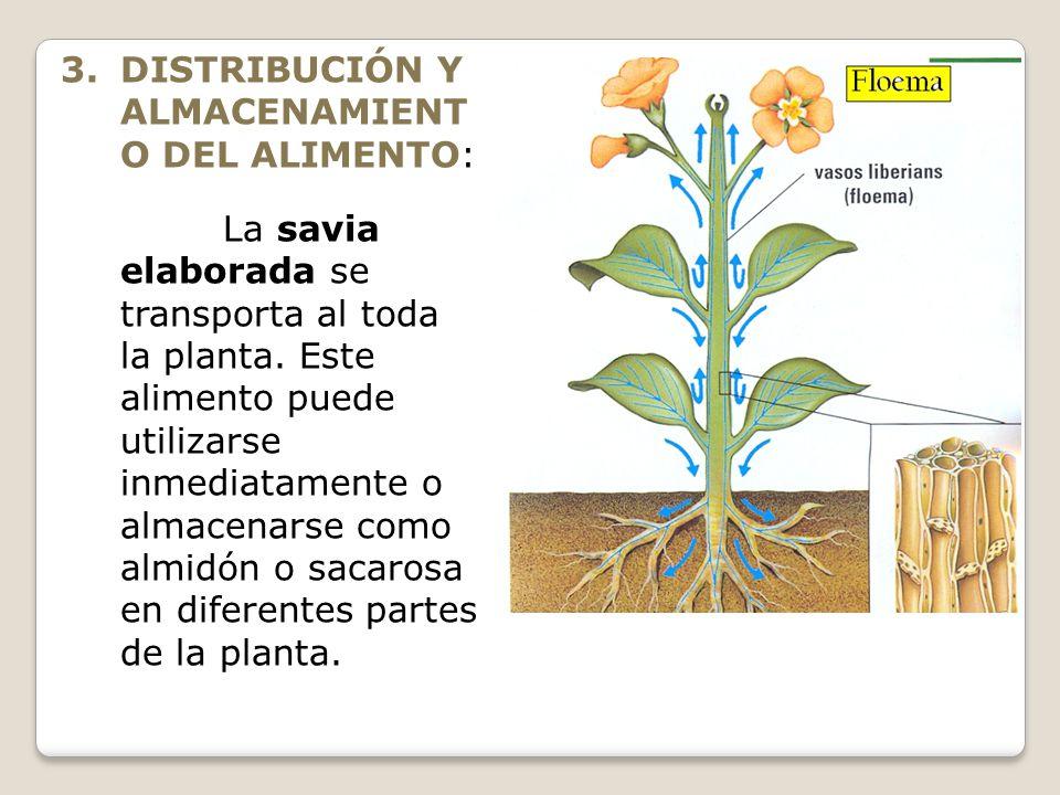 DISTRIBUCIÓN Y ALMACENAMIENTO DEL ALIMENTO: