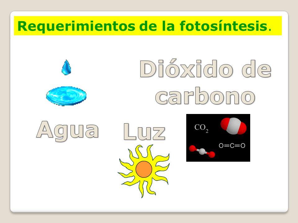 Dióxido de carbono Agua Luz