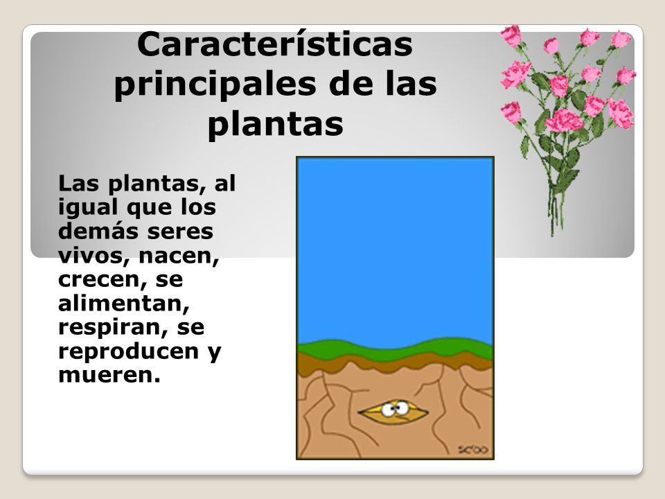 Características principales de las plantas