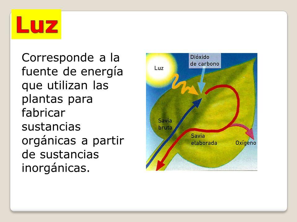 Luz Corresponde a la fuente de energía que utilizan las plantas para fabricar sustancias orgánicas a partir de sustancias inorgánicas.