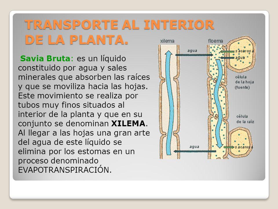 TRANSPORTE AL INTERIOR DE LA PLANTA.