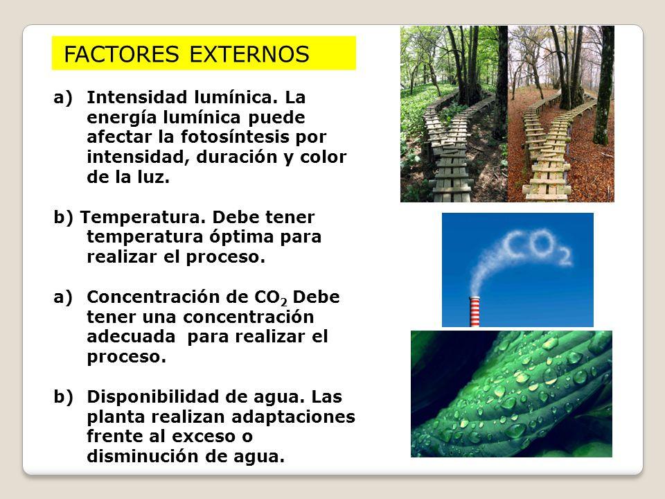 FACTORES EXTERNOS Intensidad lumínica. La energía lumínica puede afectar la fotosíntesis por intensidad, duración y color de la luz.