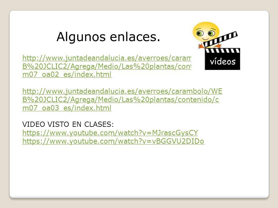 Algunos enlaces. http://www.juntadeandalucia.es/averroes/carambolo/WEB%20JCLIC2/Agrega/Medio/Las%20plantas/contenido/cm07_oa02_es/index.html.