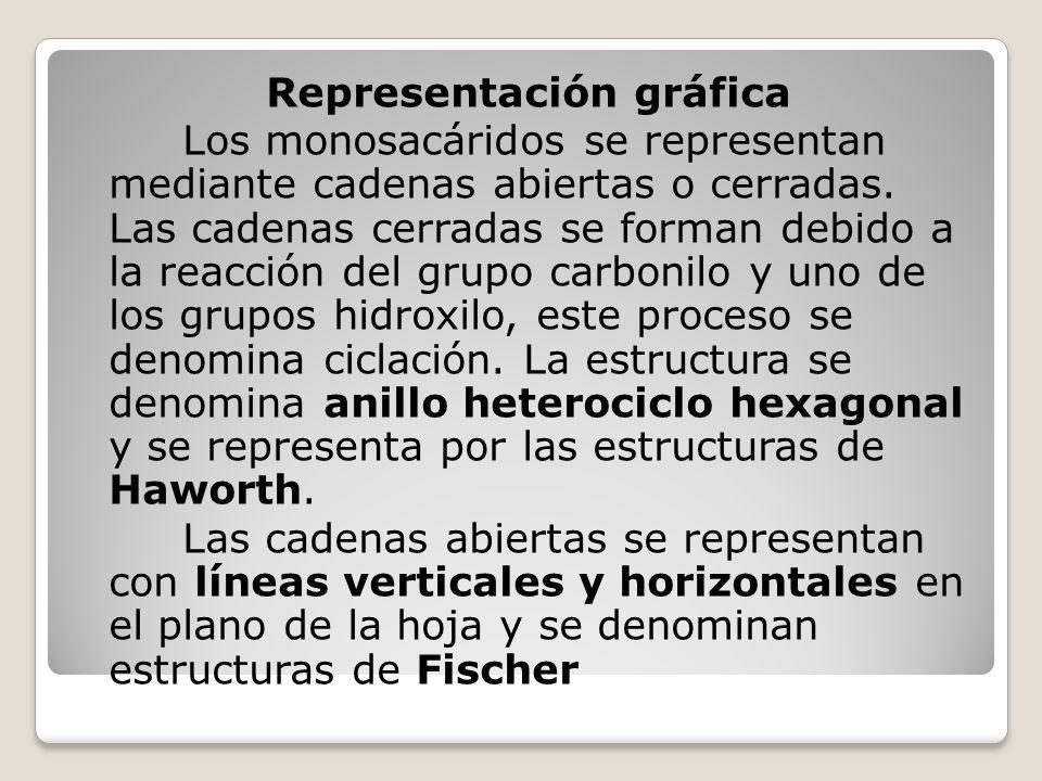 Representación gráfica Los monosacáridos se representan mediante cadenas abiertas o cerradas.