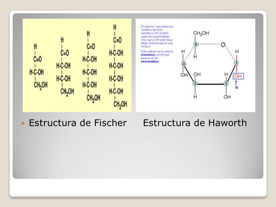 Estructura de Fischer Estructura de Haworth