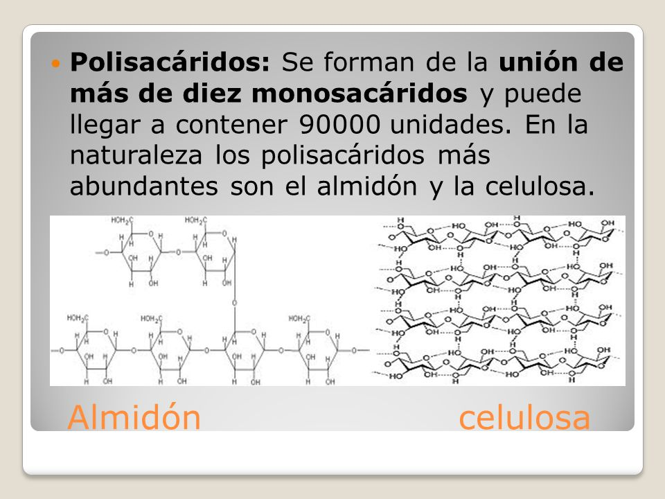 Polisacáridos: Se forman de la unión de más de diez monosacáridos y puede llegar a contener 90000 unidades. En la naturaleza los polisacáridos más abundantes son el almidón y la celulosa.