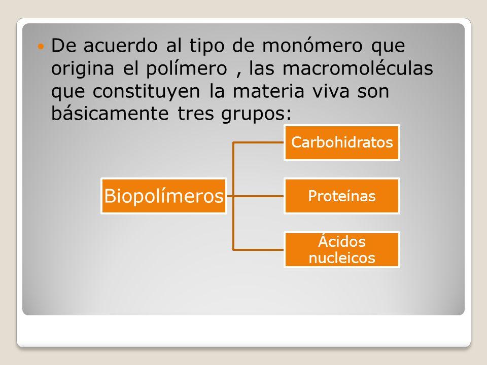De acuerdo al tipo de monómero que origina el polímero , las macromoléculas que constituyen la materia viva son básicamente tres grupos: