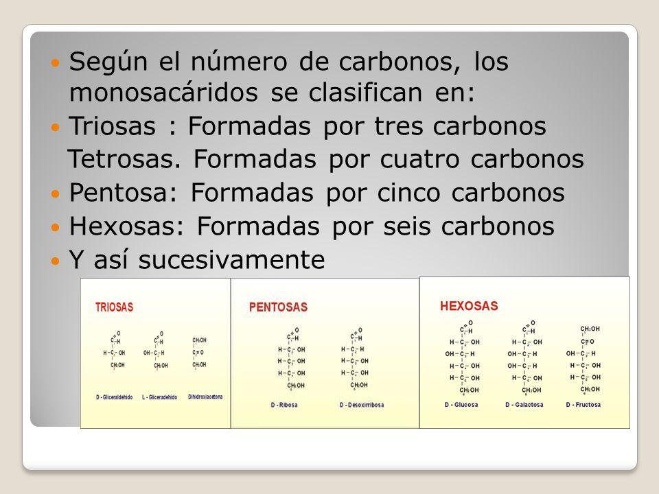 Según el número de carbonos, los monosacáridos se clasifican en: