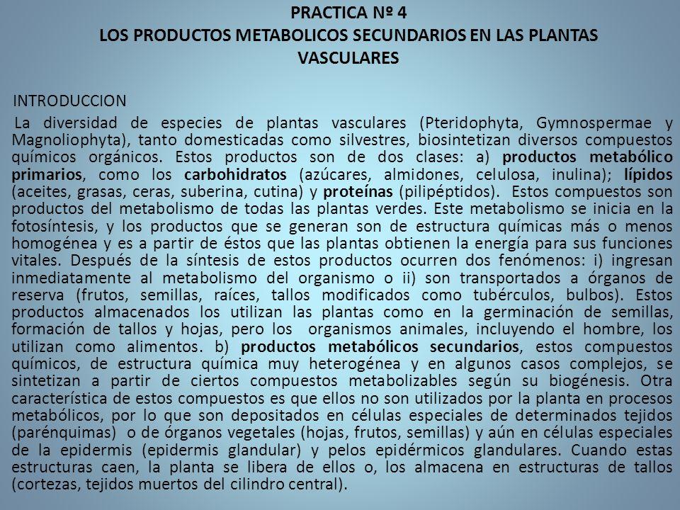 PRACTICA Nº 4 LOS PRODUCTOS METABOLICOS SECUNDARIOS EN LAS PLANTAS VASCULARES