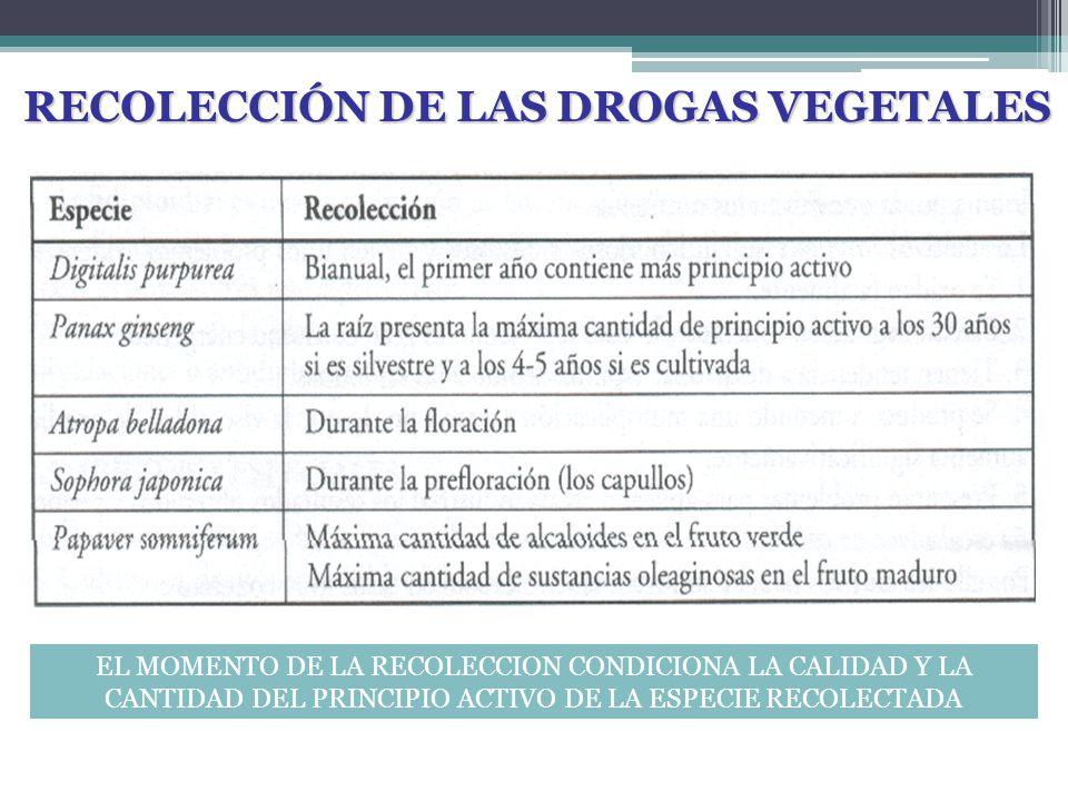 RECOLECCIÓN DE LAS DROGAS VEGETALES