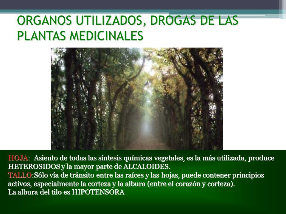 ORGANOS UTILIZADOS, DROGAS DE LAS PLANTAS MEDICINALES