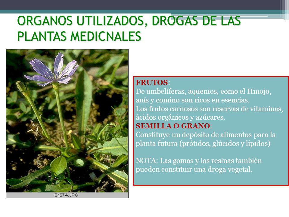 ORGANOS UTILIZADOS, DROGAS DE LAS PLANTAS MEDICNALES