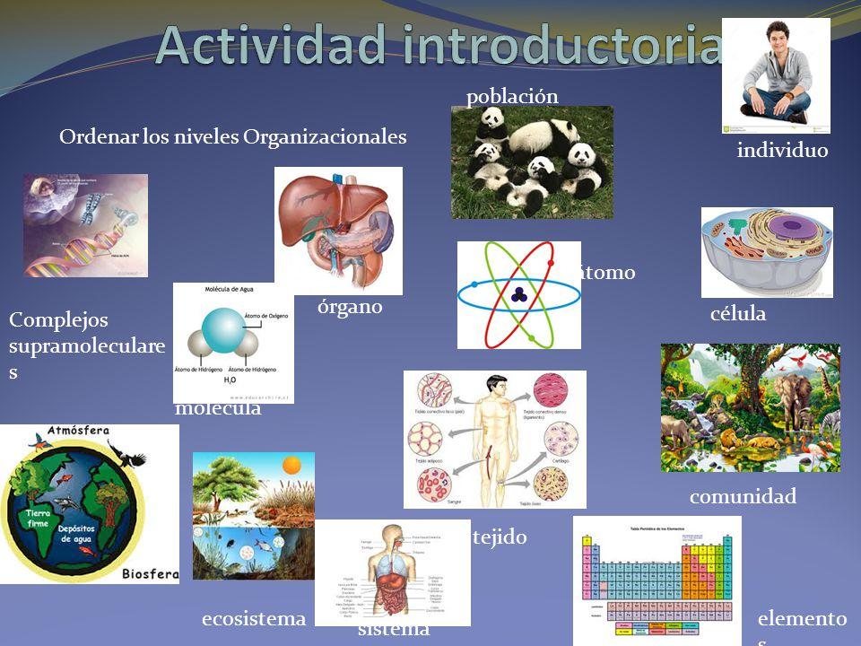 Actividad introductoria