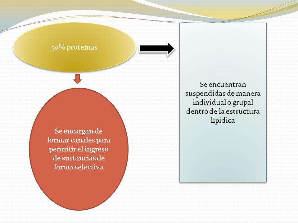 50% proteínas Se encuentran suspendidas de manera individual o grupal dentro de la estructura lìpidica.