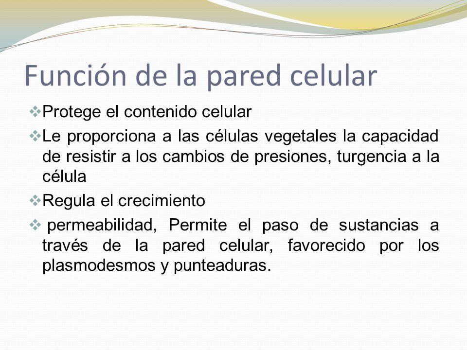 Función de la pared celular