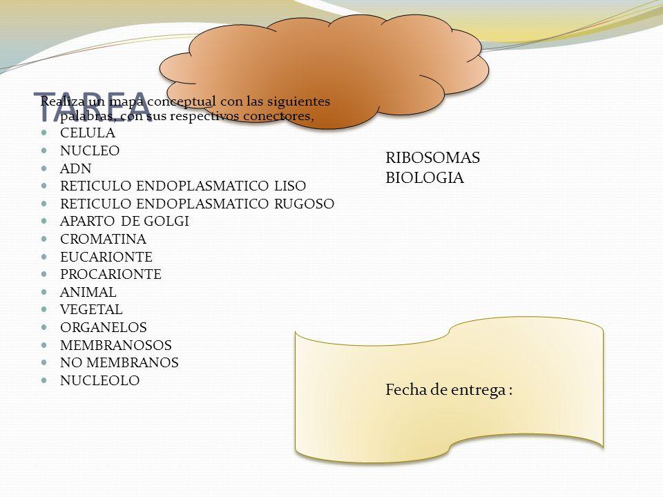 TAREA RIBOSOMAS BIOLOGIA Fecha de entrega :