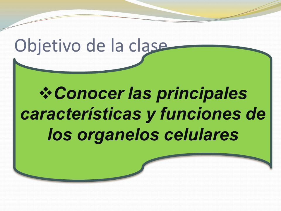 Objetivo de la clase Conocer las principales características y funciones de los organelos celulares