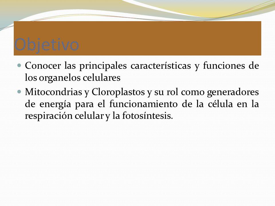 Objetivo Conocer las principales características y funciones de los organelos celulares.