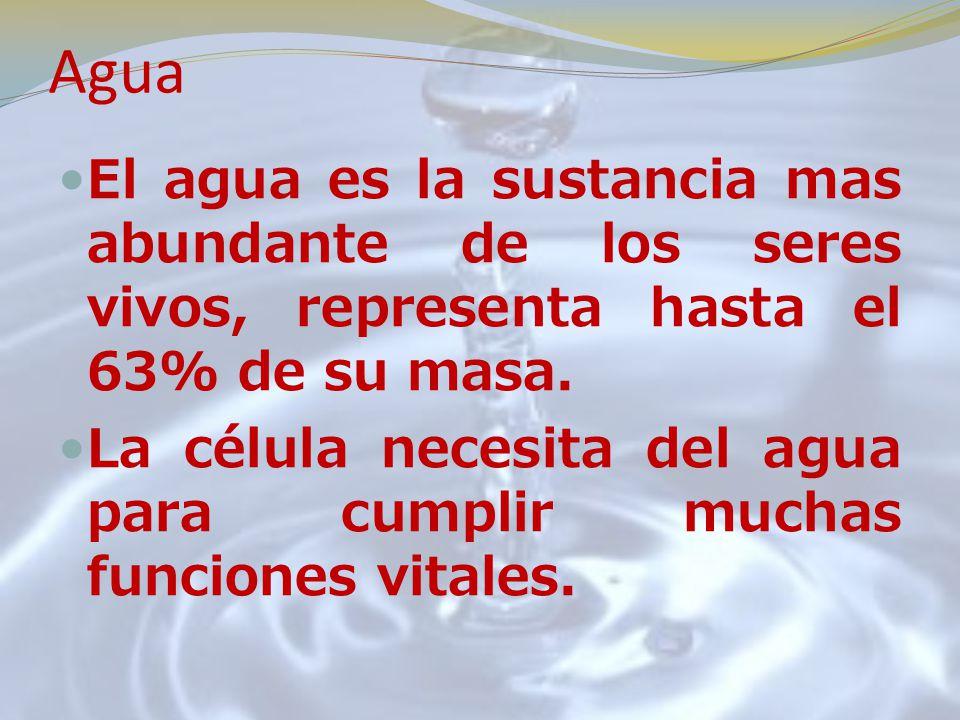 Agua El agua es la sustancia mas abundante de los seres vivos, representa hasta el 63% de su masa.