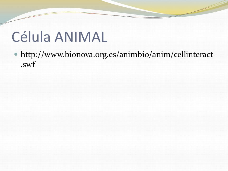 Célula ANIMAL http://www.bionova.org.es/animbio/anim/cellinteract.swf