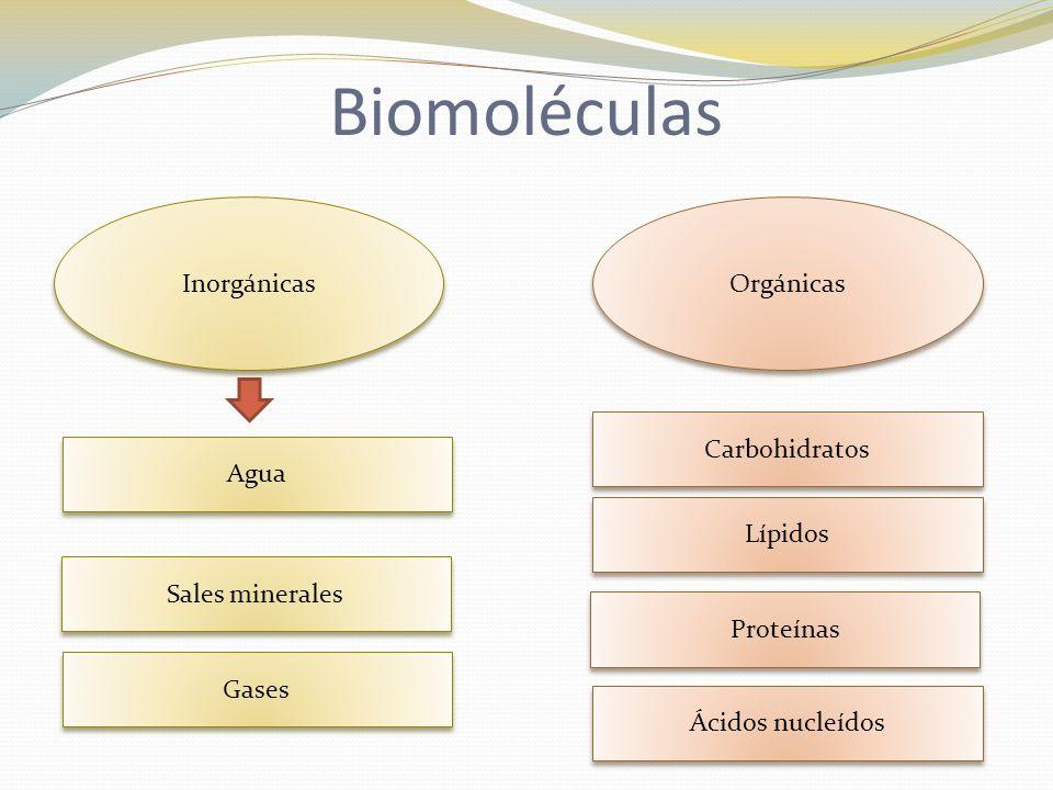 Biomoléculas Inorgánicas Orgánicas Carbohidratos Agua Lípidos