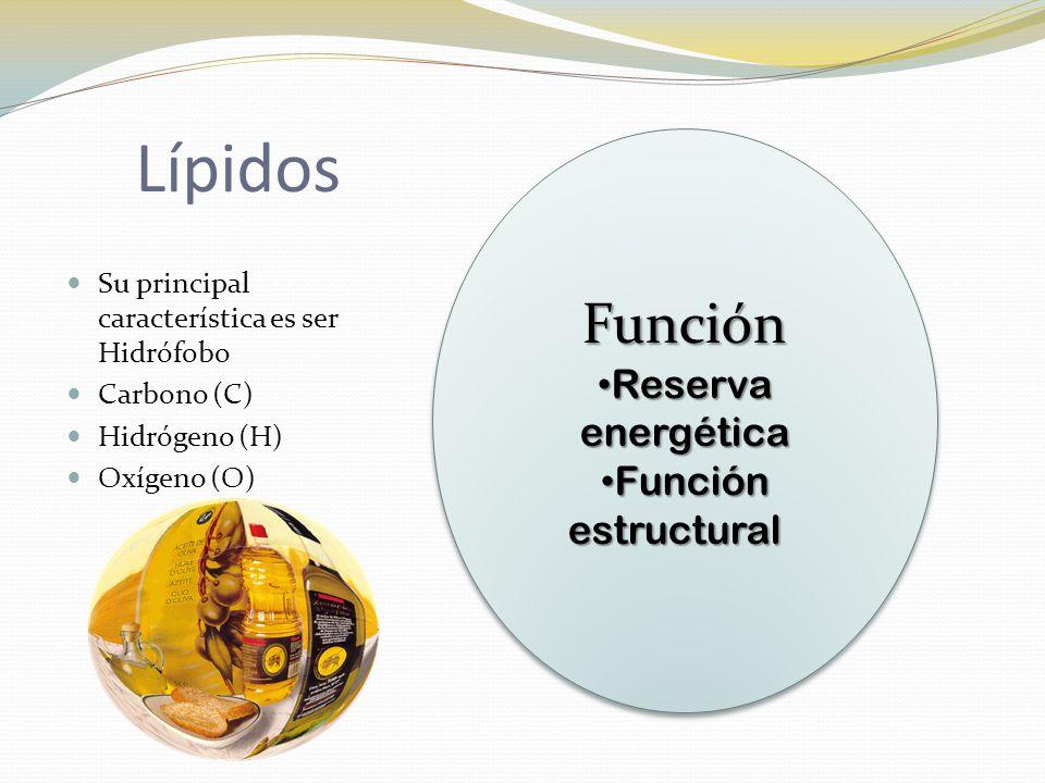 Lípidos Función Reserva energética Función estructural