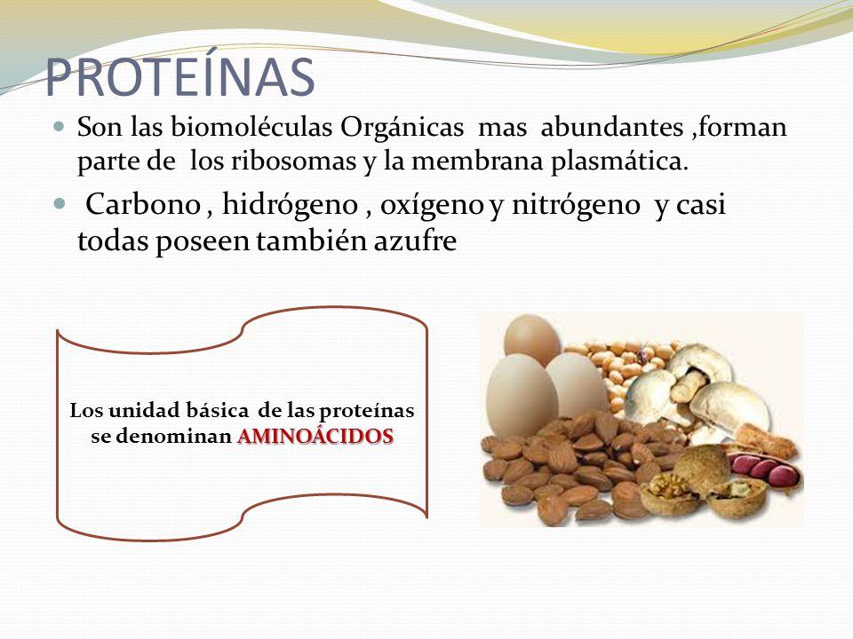Los unidad básica de las proteínas se denominan AMINOÁCIDOS