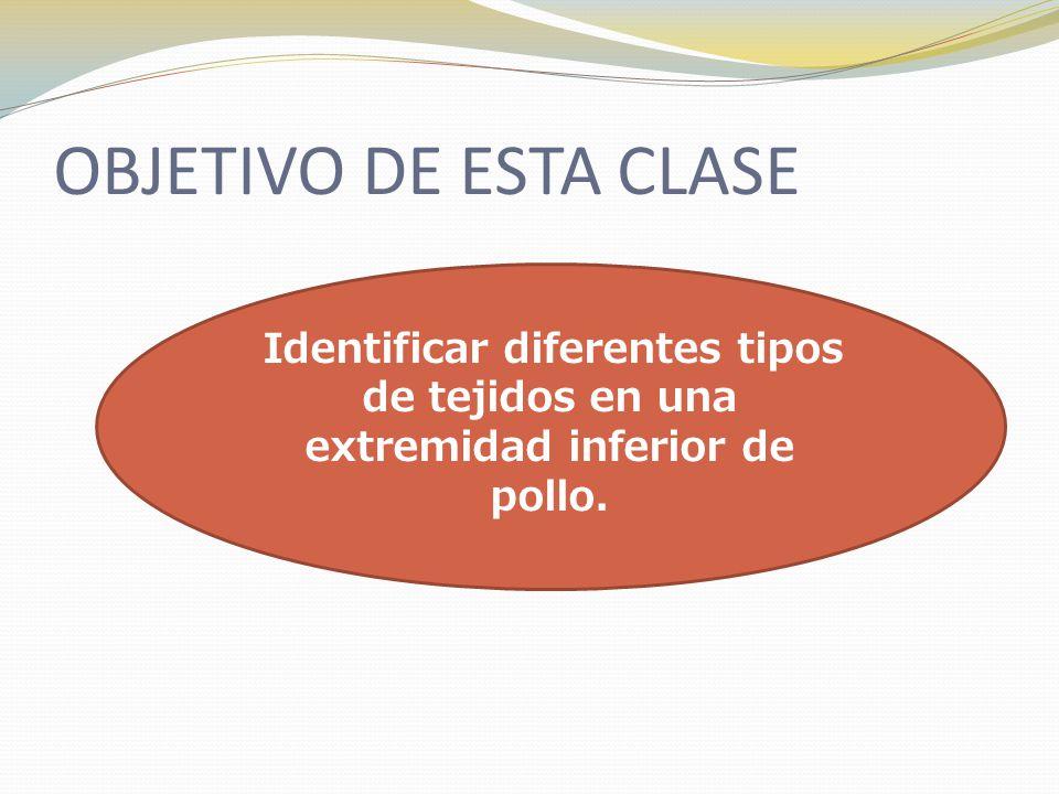OBJETIVO DE ESTA CLASE Identificar diferentes tipos de tejidos en una extremidad inferior de pollo.