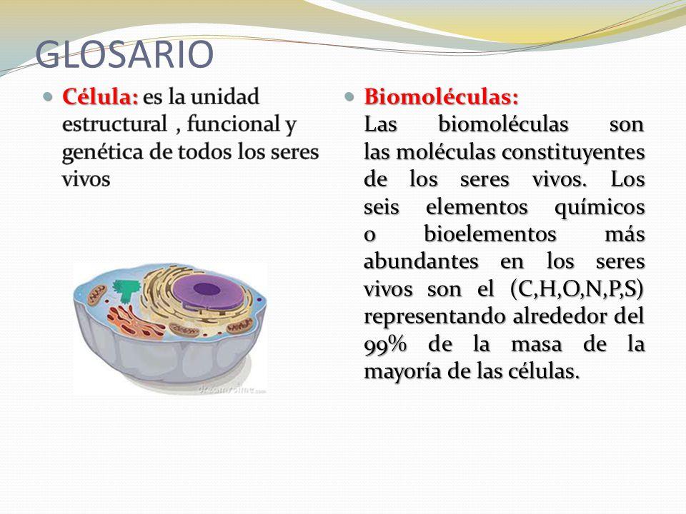 GLOSARIO Célula: es la unidad estructural , funcional y genética de todos los seres vivos.