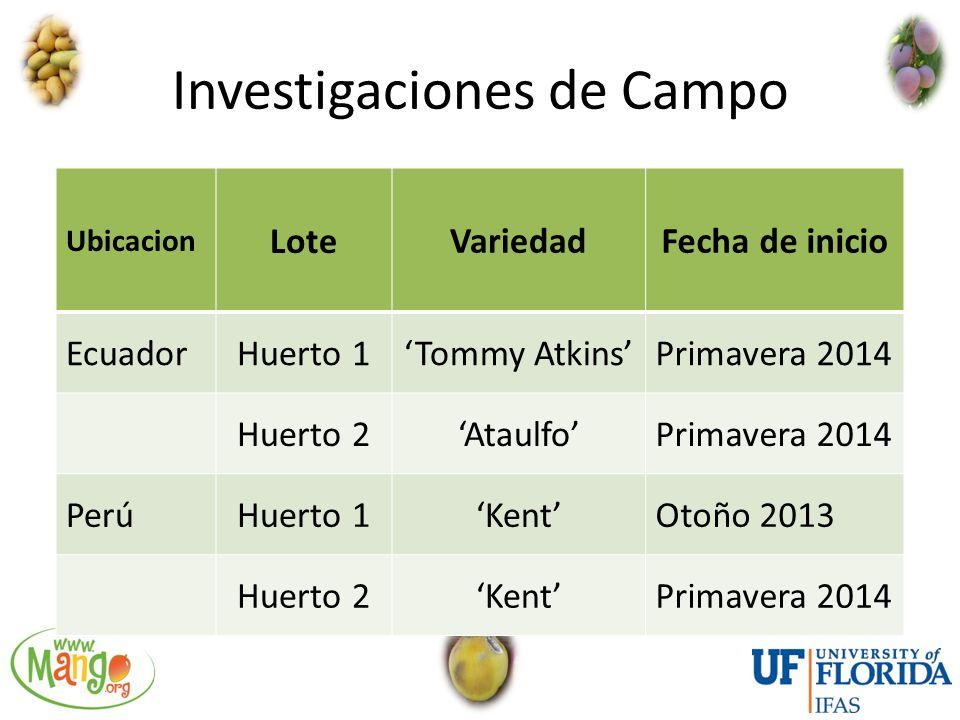 Investigaciones de Campo