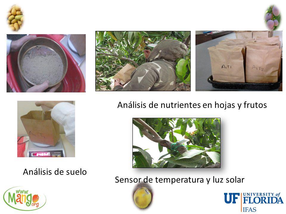 Análisis de nutrientes en hojas y frutos