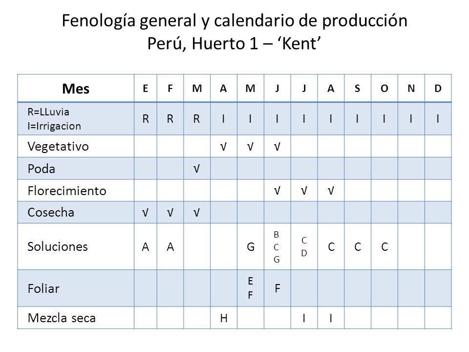 Fenología general y calendario de producción Perú, Huerto 1 – 'Kent'